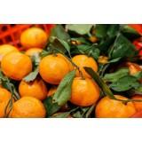 Диетологи определили безопасную ежедневную порцию мандаринов