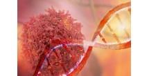 Ученые выяснили, как в три раза сократить смертность от рака